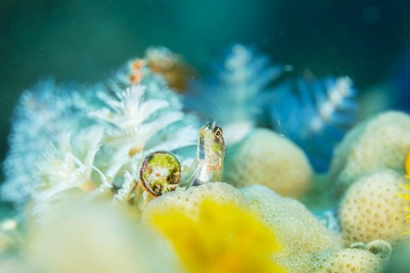 タオ島の海の特徴14-1