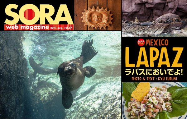 SORA-webの最新号をアップしました🌟