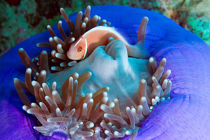 海 ゼリー状 卵